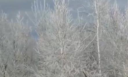 霧凇美景 玉樹瓊花