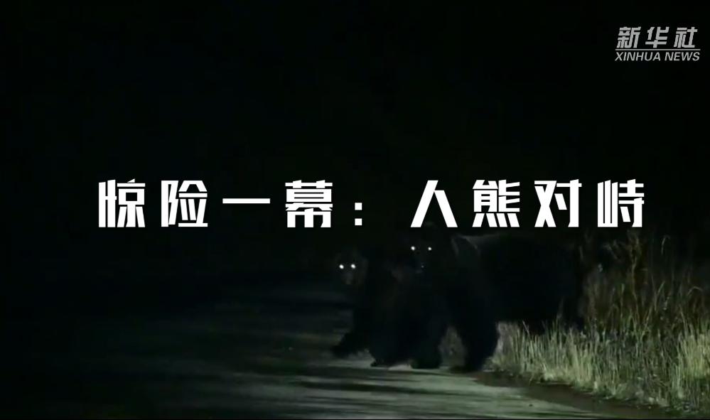驚險一幕:人熊對峙