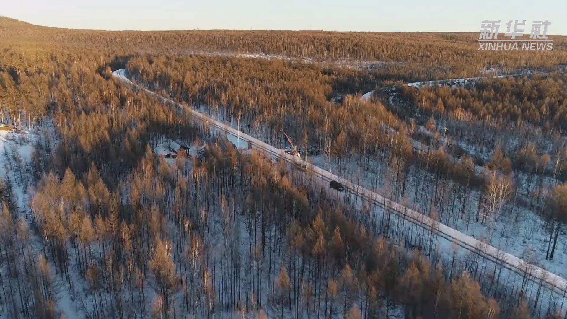 冬日斜陽灑森林