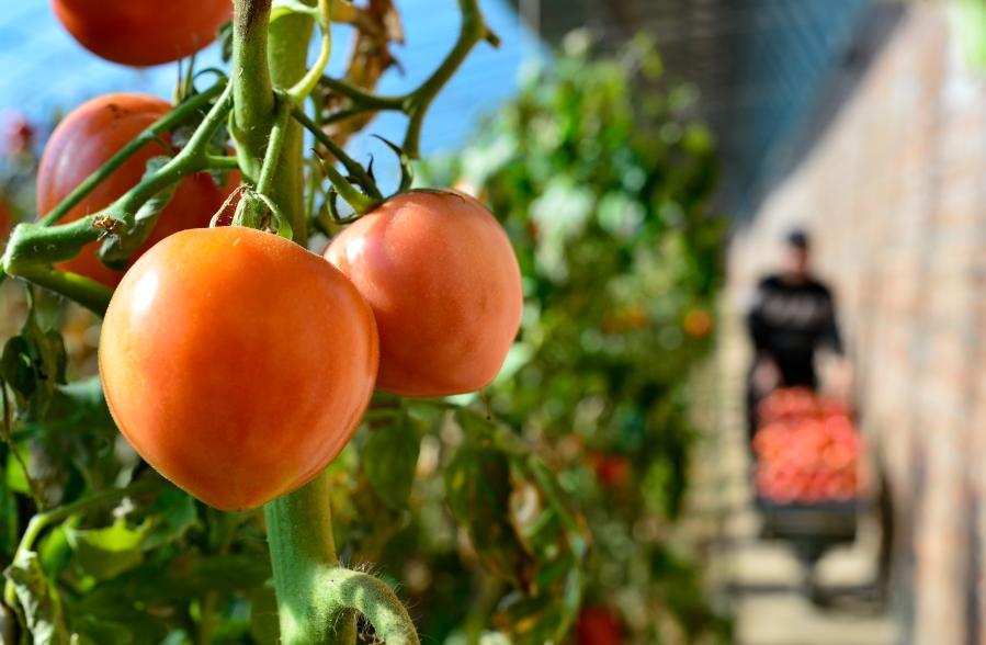 鄂爾多斯:多措並舉助易地搬遷農牧民穩定增收
