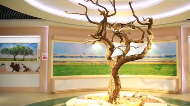 牧民建起動植物民間展覽館
