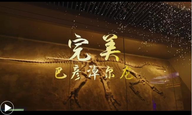【草原寶藏】完美巴彥淖爾龍