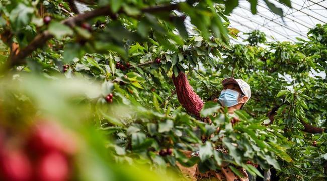 內蒙古寧城:設施農業促農增收