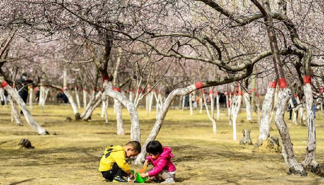青城桃花始盛開