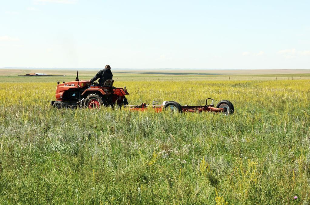 天人合一 內蒙古因地制宜實施草原修復