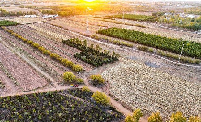 內蒙古鄂爾多斯:秋收田園 景美如畫